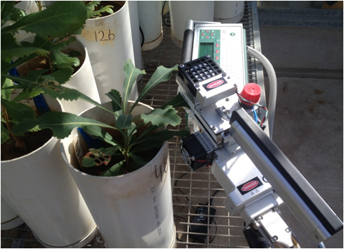 measuring photosynthesis