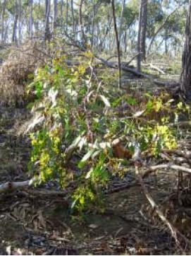 Boxforest